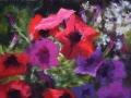 Petunia Passion